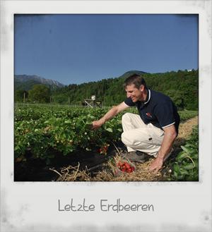 Letzte Erdbeeren