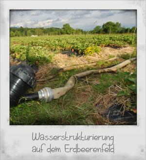 Wasserstrukturierung auf dem Erdbeerenfeld